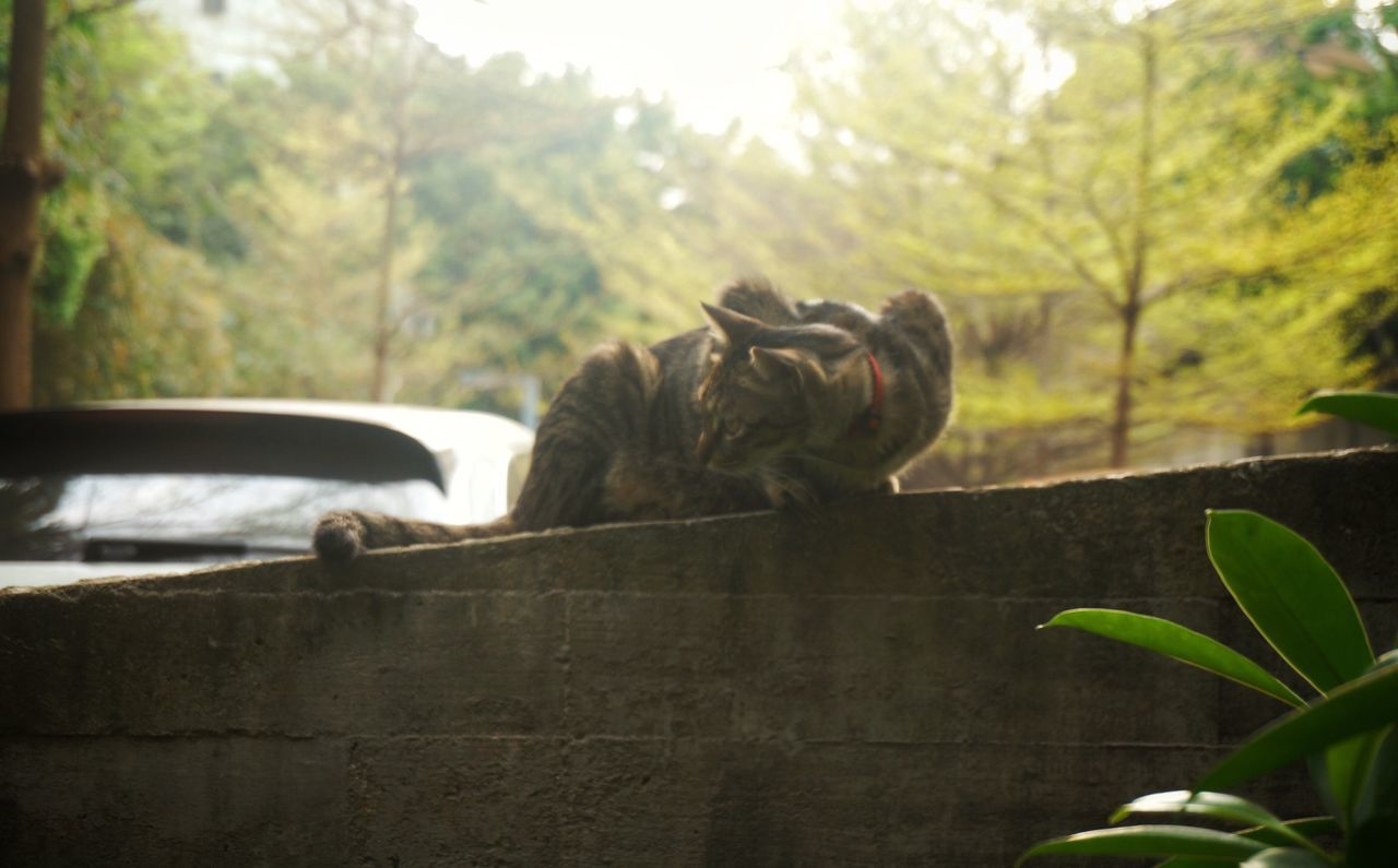 animal themes, mammal, one animal, nature, no people, growth, day, feline, outdoors, domestic animals, tree