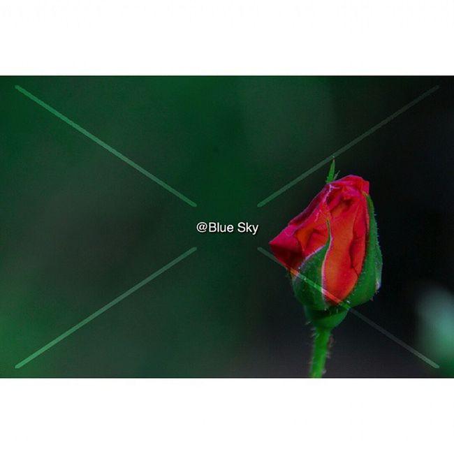 Spring 2015Nikon D7100Nikor VR 18-300