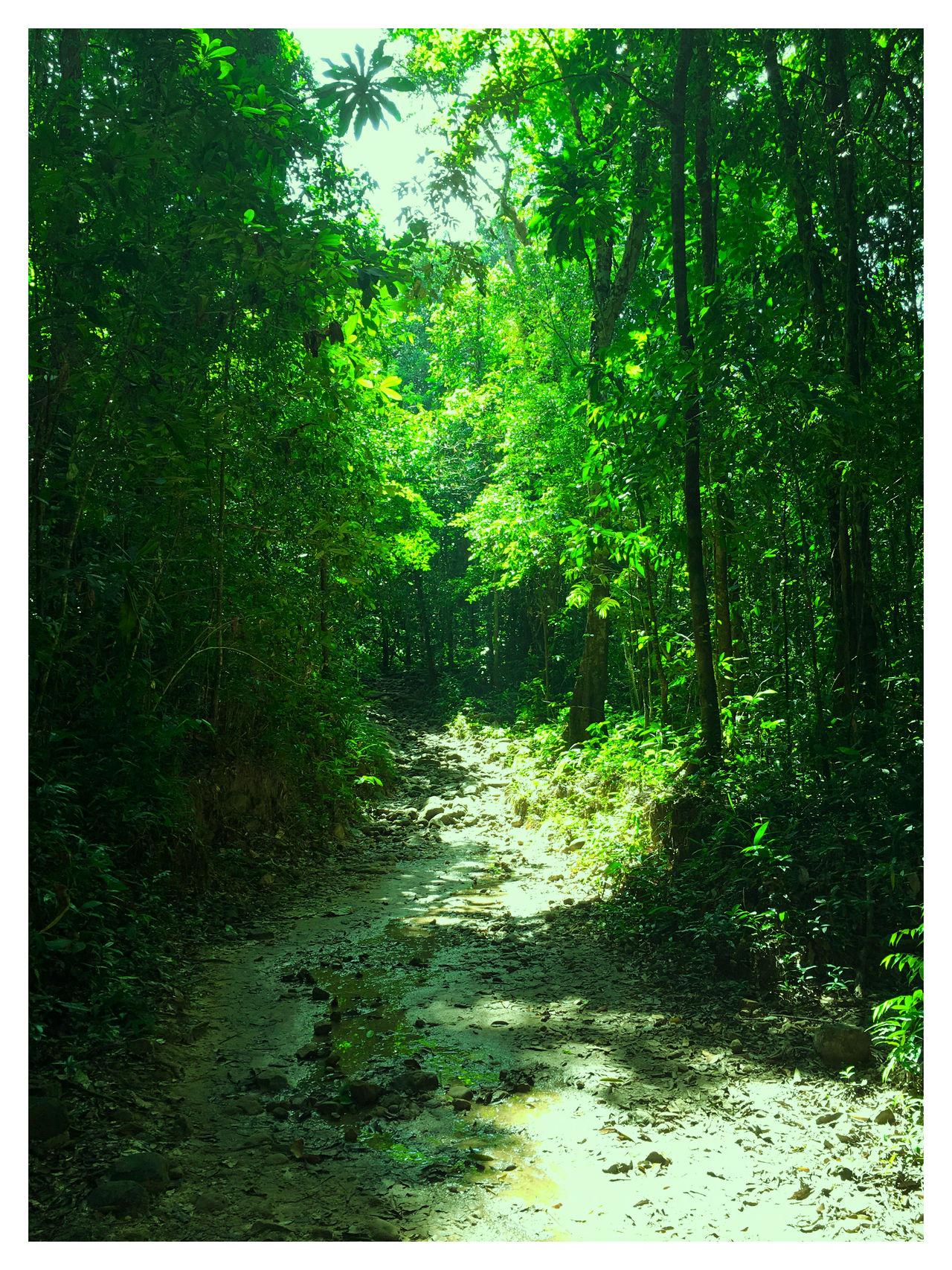 Nature Forest Thailand Koh Kood Showcase: February