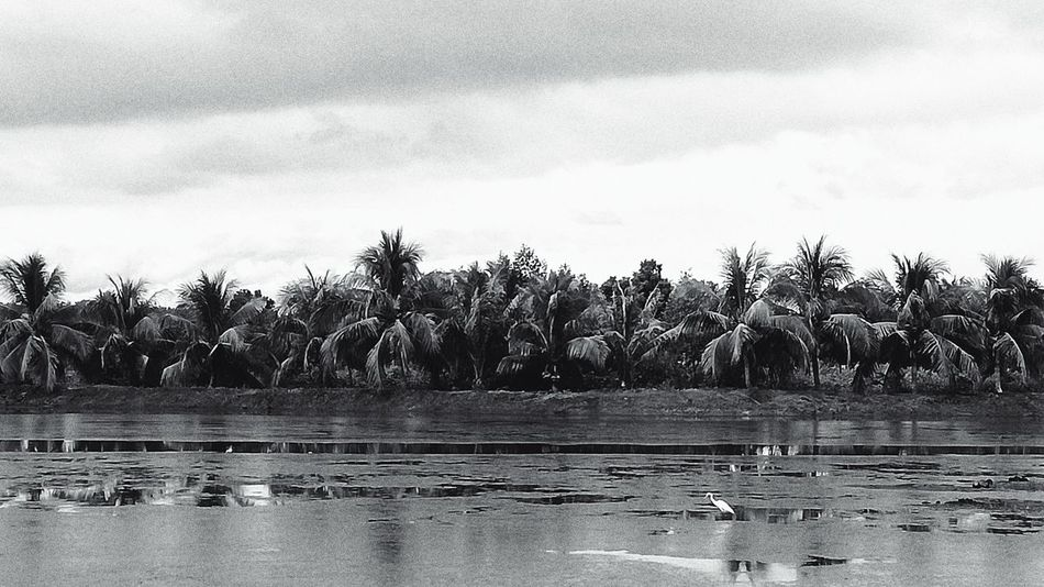 Coco Bay Tree Water Tranquility Nature Day Outdoors Growth Scenics Sky Beauty In Nature Nature Travel EyeEm Best Shot S - Sunsets + Sunrise Travel Destinations EyeemPhilippines Lines And Patterns Eyeem Philippines Black And White Collection  Black & White Photography Tranquility EyeEm Travel Photography Vacation Destination Beauty In Nature