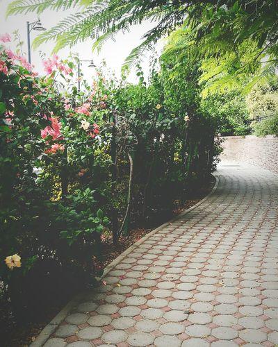 الكثير من الأمور ، تجعلنا أشدّ سعادة ؛ كَـ رؤية معالم وطني مثلا ! قصر_العلم عمان جمالكم جمال ♥ Relaxing Family❤ Love ♥ Nature No People Green Color Mine ❤ Flowers Oman_photo