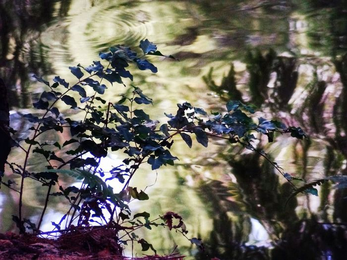 EyeEm Nature Lover Water Reflection Illuminations Creative Light And Shadow Plant 🌈⭐🌠🌍🌞 Check This Out 😊 EyeEm Best Shots Feel The Moment Tranquil Scene Artphotography Beautiful ♥