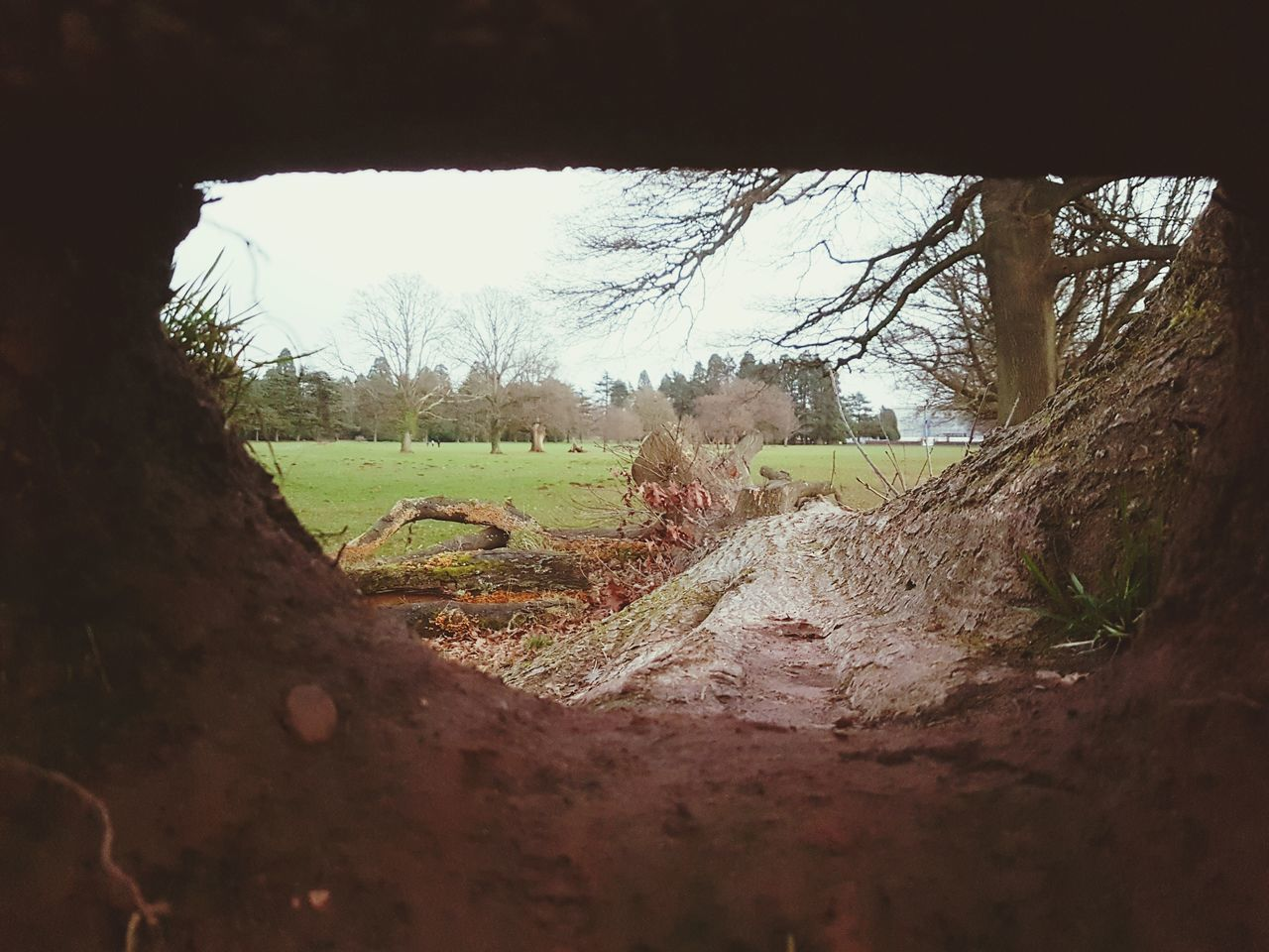 View to a kill Tree Sky Landscape No People Day Outdoors Nature Tunnel Vision Tredegar House Newport Nature Tunnel Textured  Wood - Material Cracked Decaying Wood Rotting Wood Dead Tree Rotting Tree Trunk Dead Plant Beauty In Nature Tree Decaying Close-up Fallen Tree