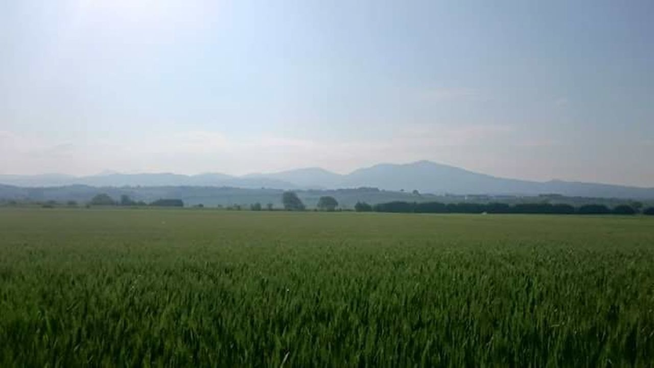 The view to the Blackforest, germany. I took this shot at early morning, while walking with my dog. Blackforest Summer Xperiaphotography Wheat Field Life Is Beautiful Germany Deutschland Schwarzwald Müllheim Quiet Moments Nature Photography Happiness
