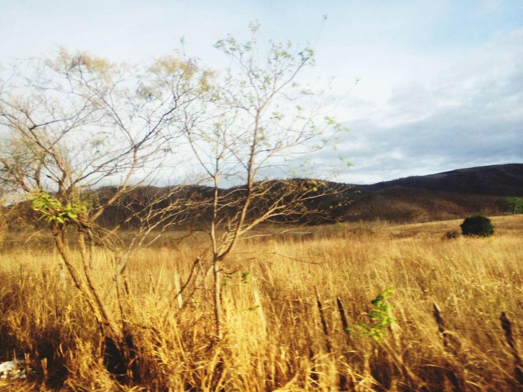 E eram como campos de trigo que se abriam pela paisagem!!!!