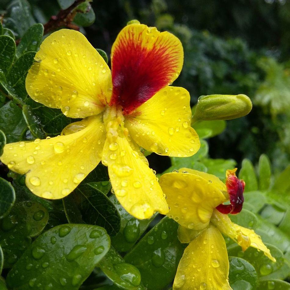 Trees Flowers,Plants & Garden Hello World Wellow Paubrasil EyeEm Nature Lover Flowers