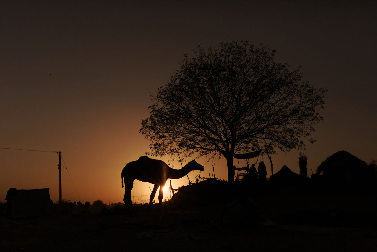 Pushkar, 2016 Beauty In Nature Camel Desert India Nature No People One Animal Pushkar Rajasthan Silhouette Sillouette Sunset Travel Travel Destinations Travel Photography