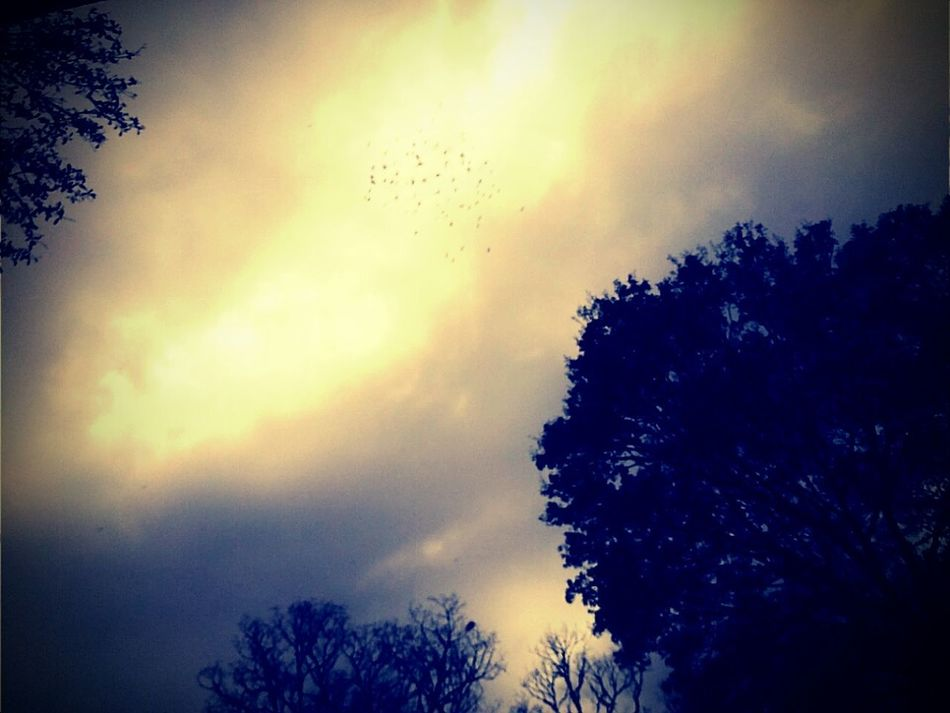 Fly Sky SKY POWER Glow Golden Light First Eyeem Photo Flock Of Birds in the middle Birds A Break In The Clouds Reveal A Secret Perfect Timing Traveling Home For The Holidays
