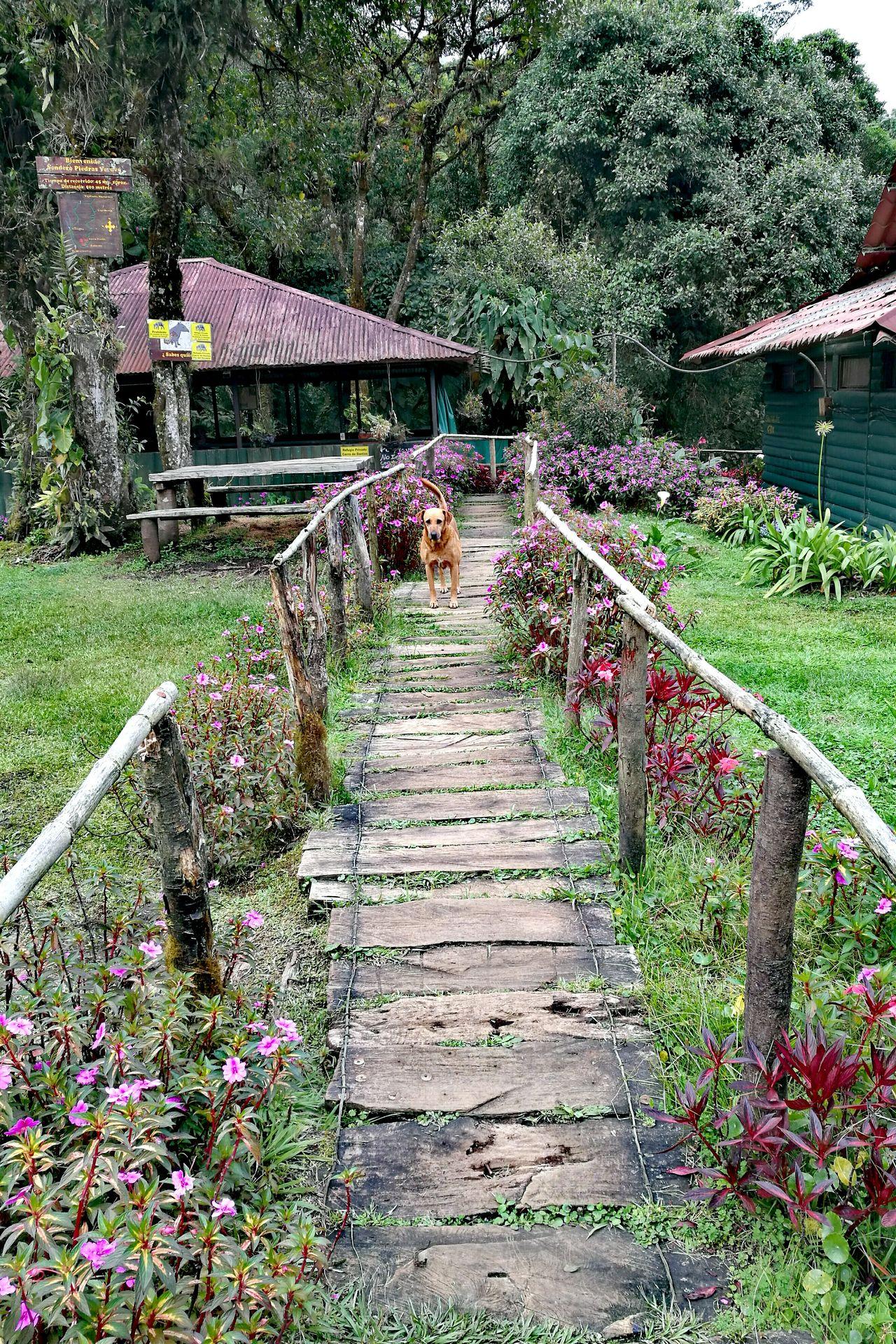Beauty In Nature Nature Reservadevidasilvestreladantan,Heredia