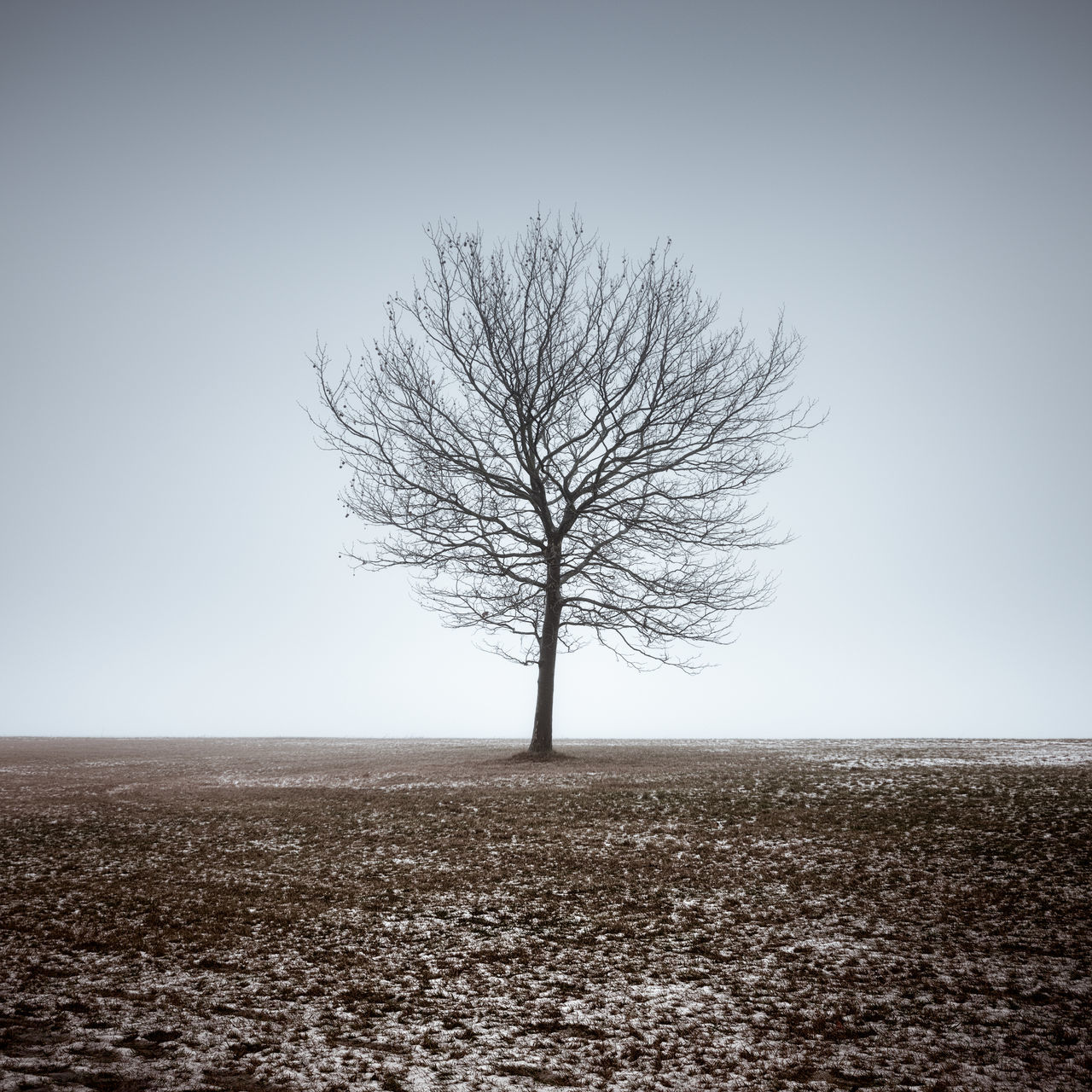 barren tree on the tempelhofer field in berlin Bare Tree Beauty In Nature Berlin Business Clear Sky Day Fine Art Isolated Landscape Lone Long Exposure Muted Colors Nature No People Outdoors Philipp Dase Remote Single Tree Sky Solitude Tempelhofer Feld Tranquil Scene Tree Tree Trunk Water
