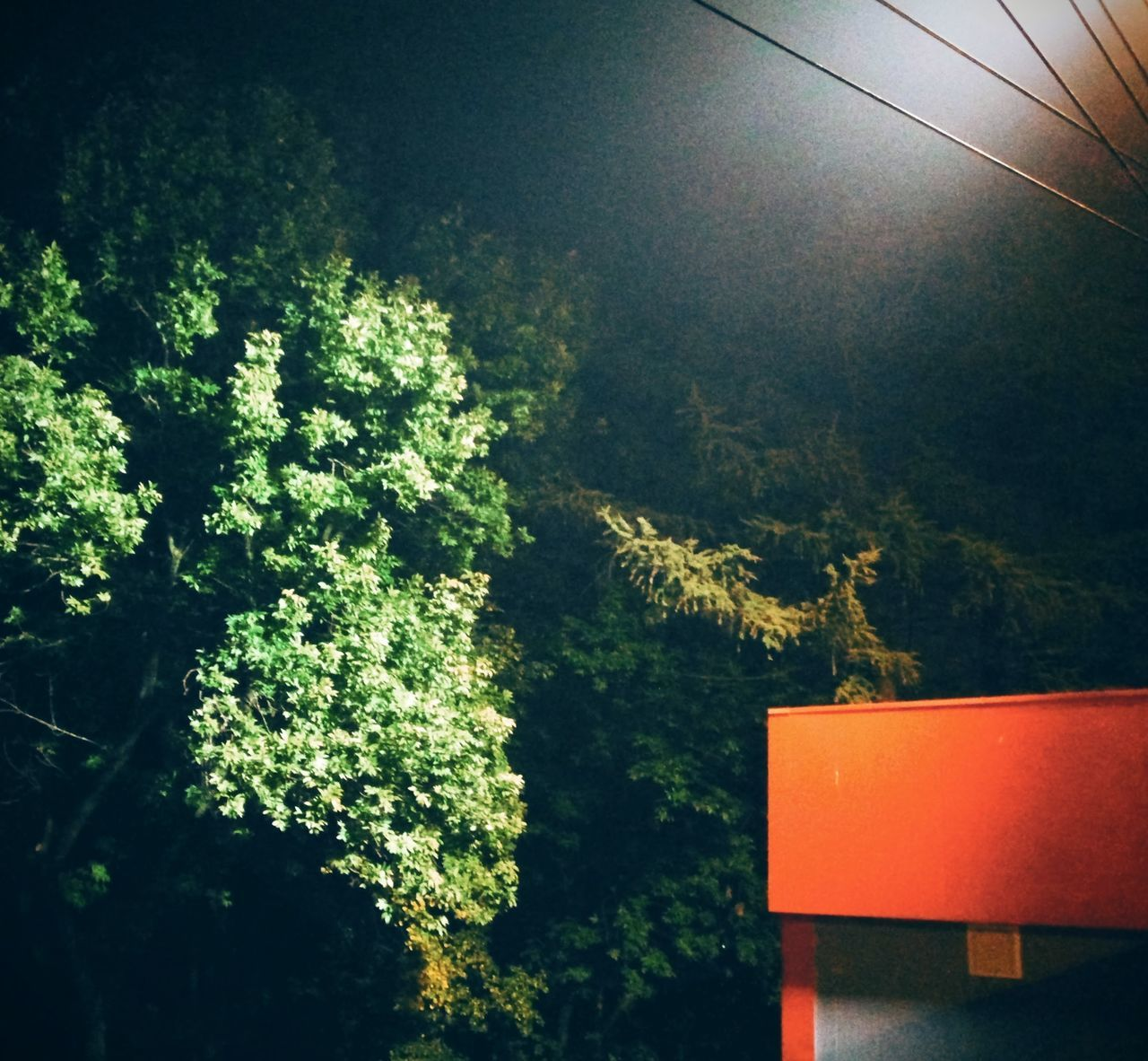 Adapted To The City Tree No People Plant Outdoors Tree Orange Color Green Color дерево туман Fog