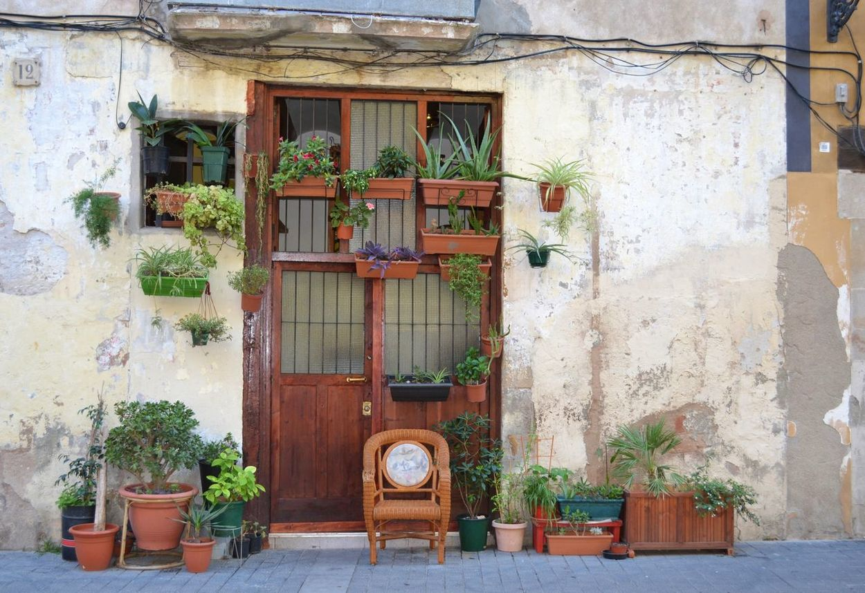 Barcelona Bario Gotico Brown Decoration Front Or Back Yard Green Growth Maron Má Plant SPAIN Summer Travel Travel Photography Travelling Wall