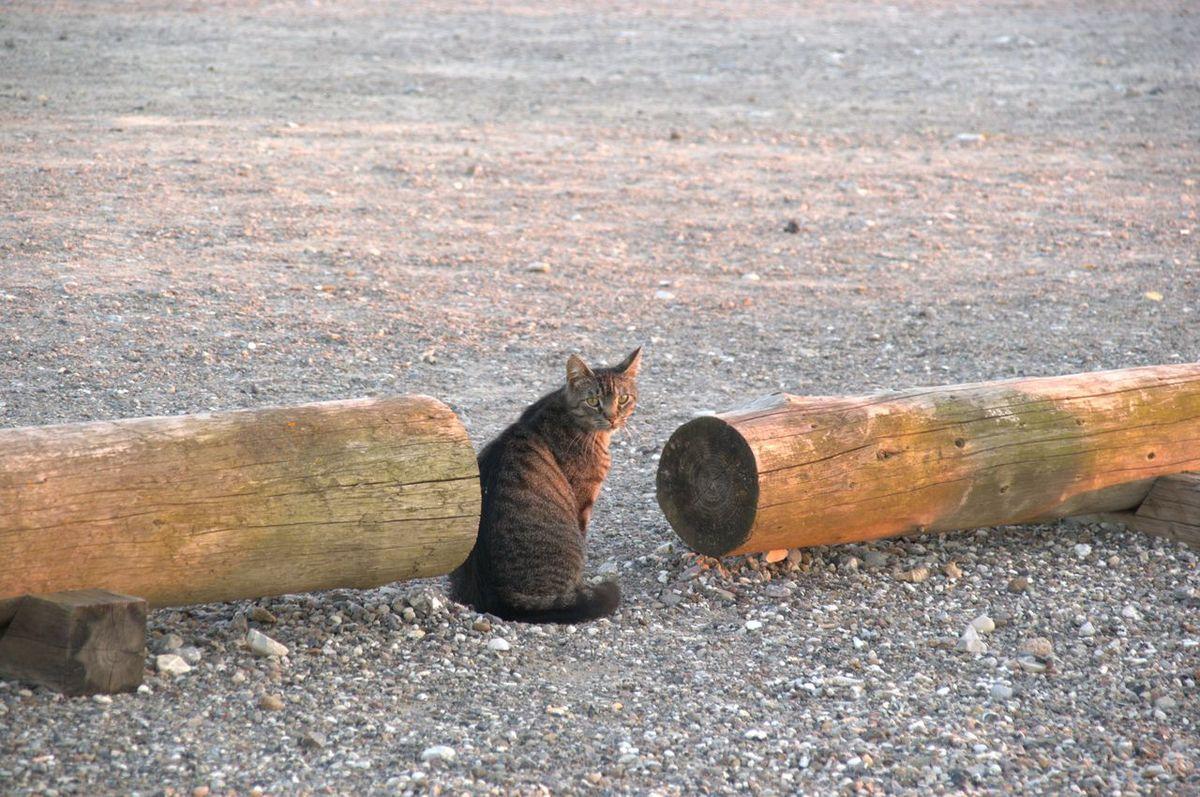Cat Close-up Day Denmark Mammal Nature No People Nofilter Outdoors Rusty Scandinavia Visitaeroe Travel sunset Wood - Material