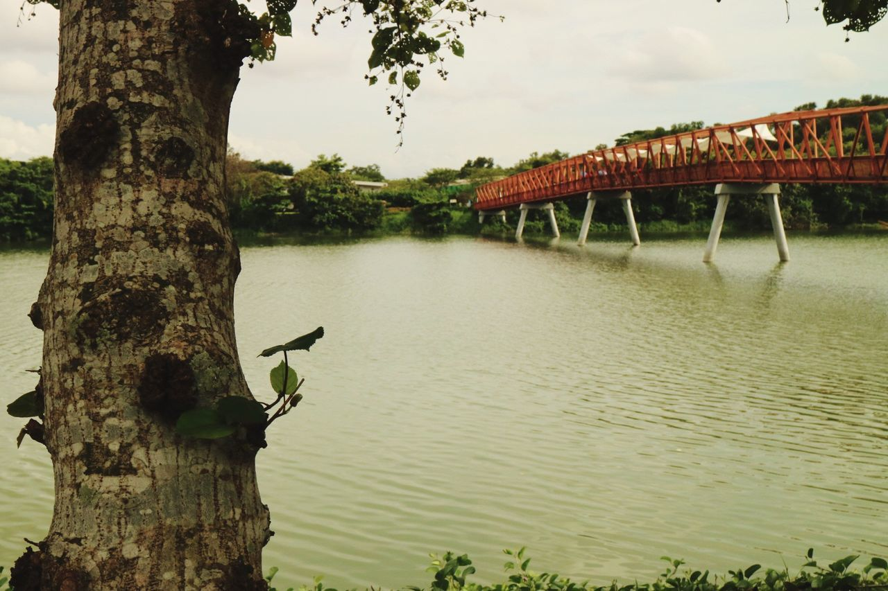 Tree Water Nature Day River Sky Outdoors Tree Trunk Architecture No People Relaxing View Bridge - Man Made Structure Beauty In Nature Eyeem Singapore