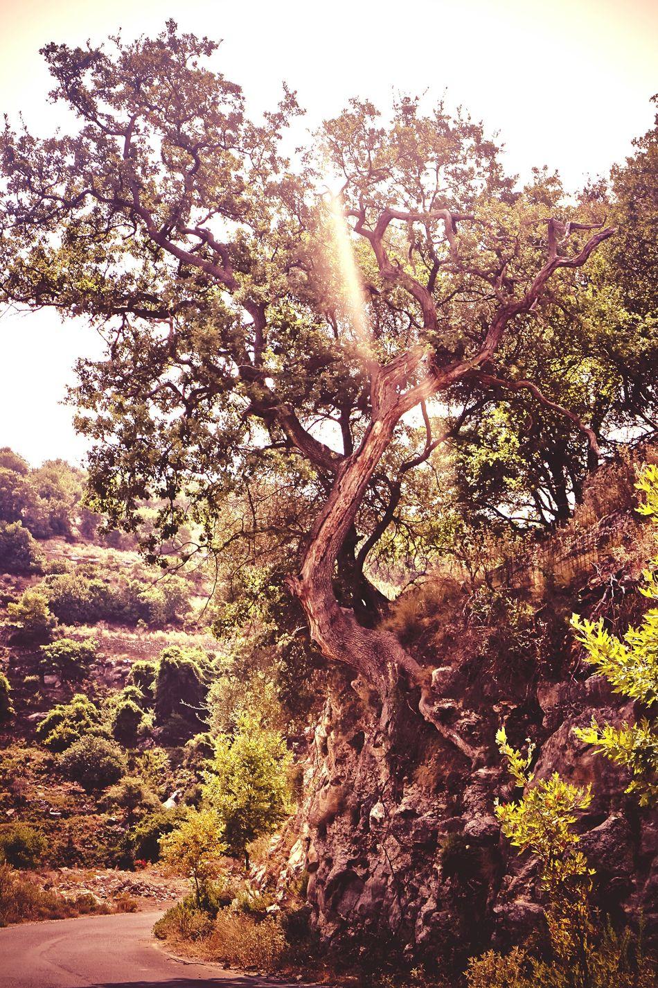 griechischer alter Olivenbaum My Favorite Photo Shadows & Lights Wood - Material Olivegarden Baum 🌳🌲 Grichenland