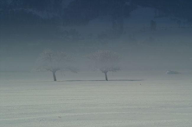 Schweiz Switzerland Wallis Leuk Winter Baum Tree Winter Wonderland Wintertime Winter Trees Nebel Foggy Morning