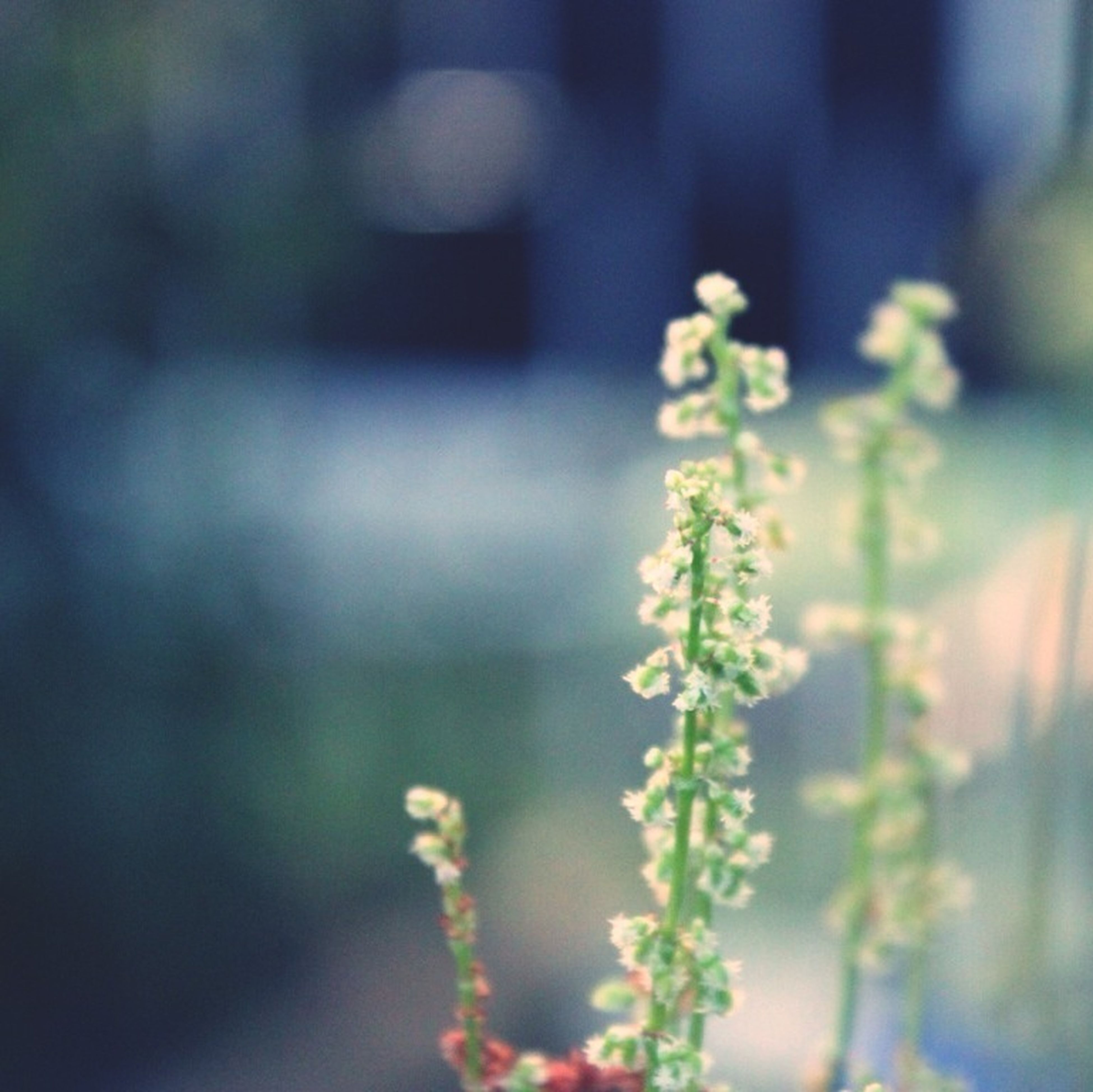 flower, freshness, fragility, focus on foreground, petal, growth, flower head, beauty in nature, close-up, stem, plant, white color, selective focus, blooming, nature, bud, in bloom, blossom, day, botany