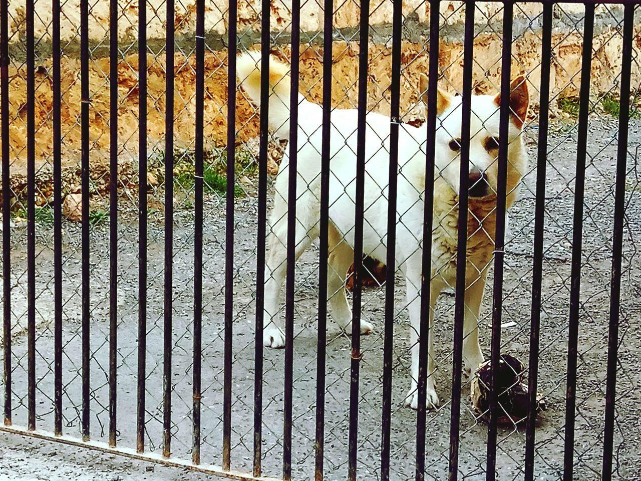 Dog perpp Perro Pensador Perro Filósofo Thinking Dog Big Dog My Dog Quiet Dog