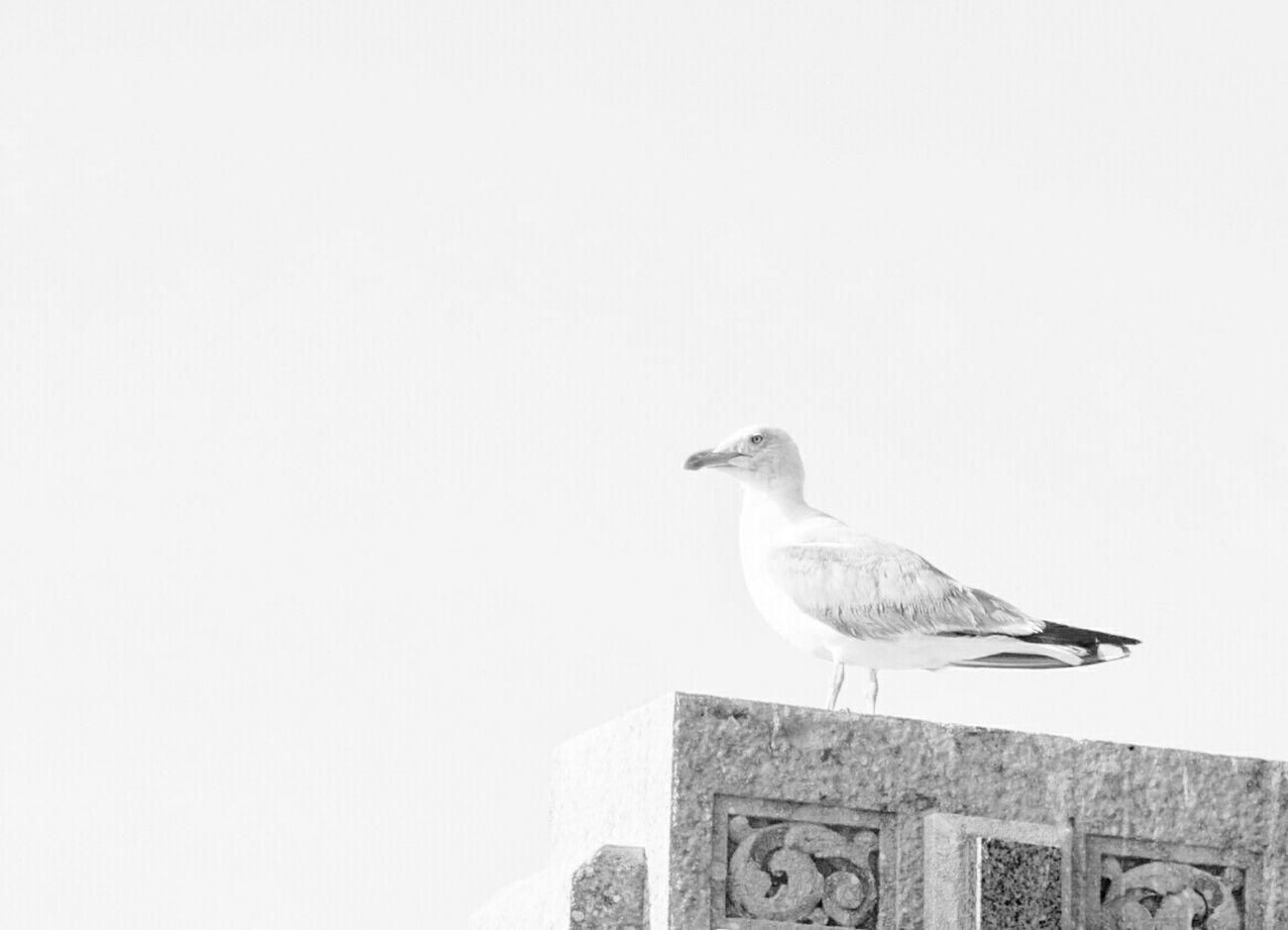 Minimalobsession Minimalism White Shades Of Grey Mi Serie Minimal