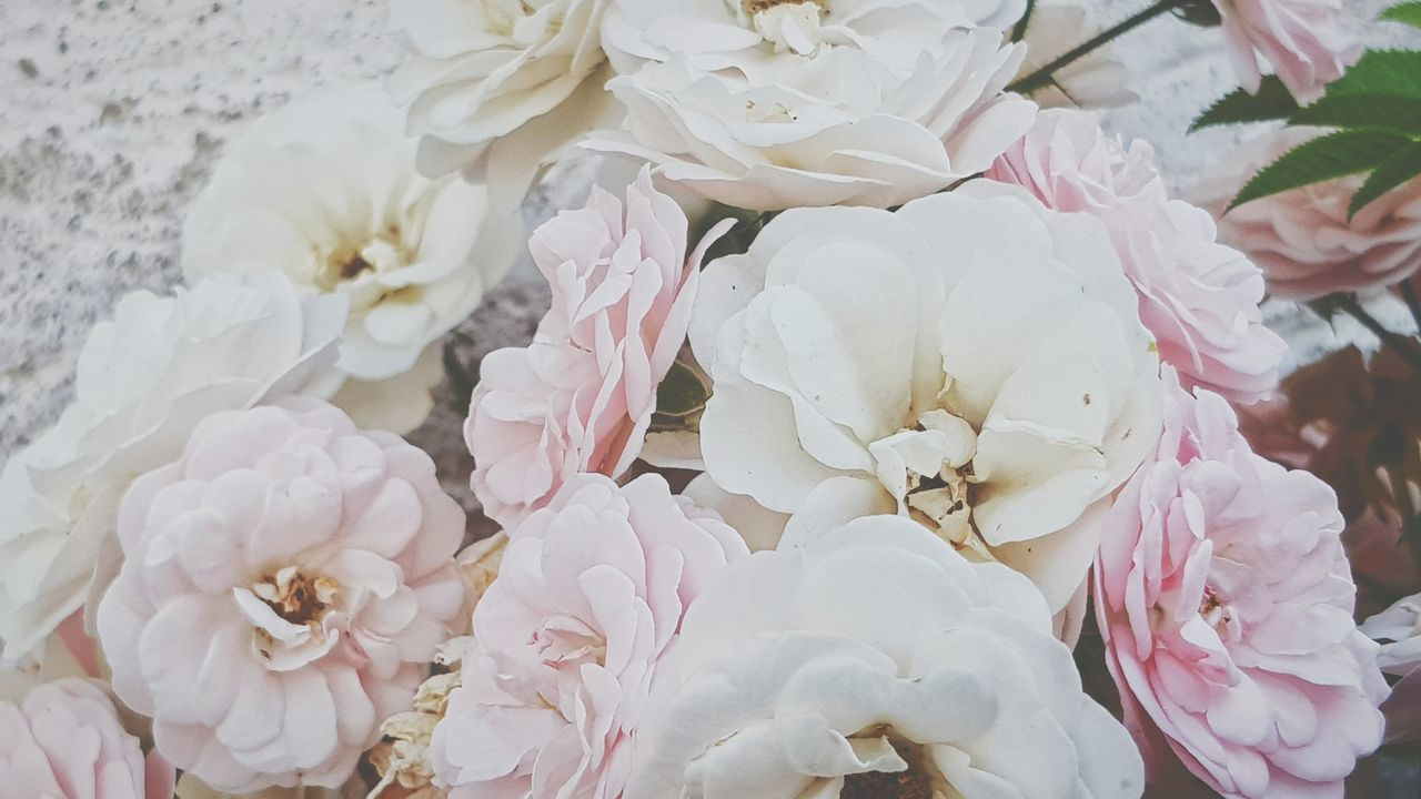 flower, petal, fragility, flower head, rose - flower, white color, beauty in nature, freshness, no people, nature, close-up, pink color, bouquet, indoors, springtime, day