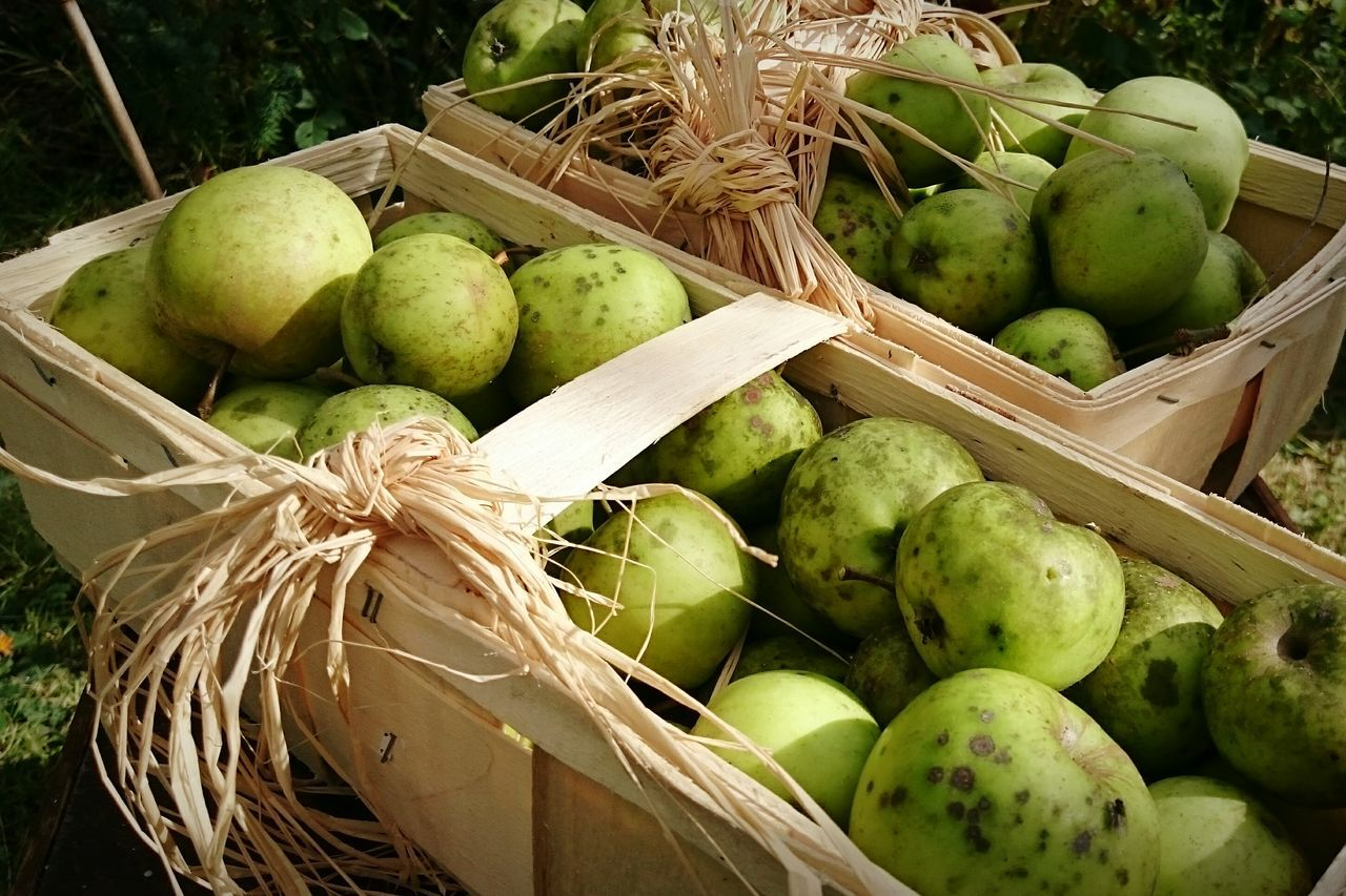 food and drink, fruit, healthy eating, green color, food, no people, freshness, day, outdoors, close-up