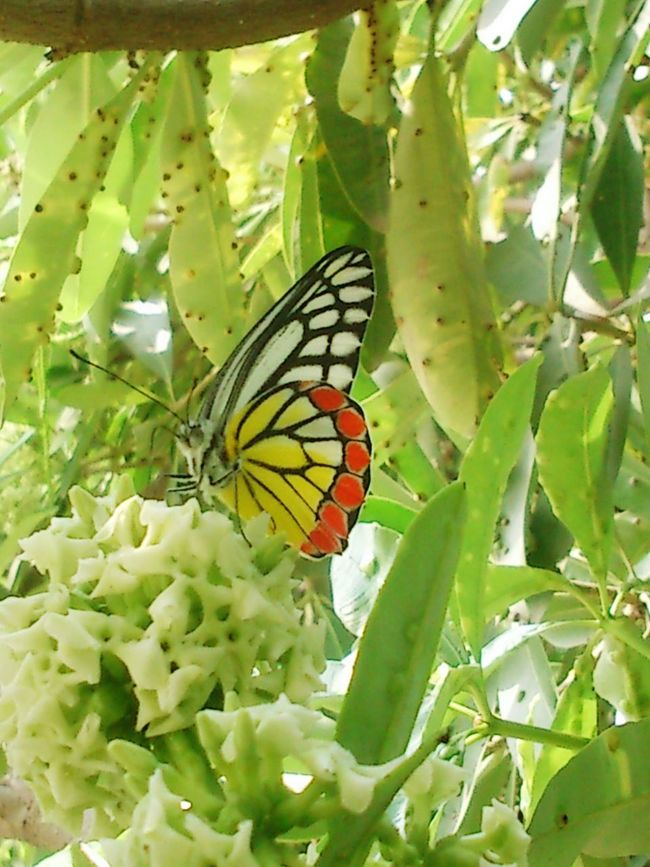 Butterfly - Insect Beauty In Nature Freshness Nature Butterfly Close-up