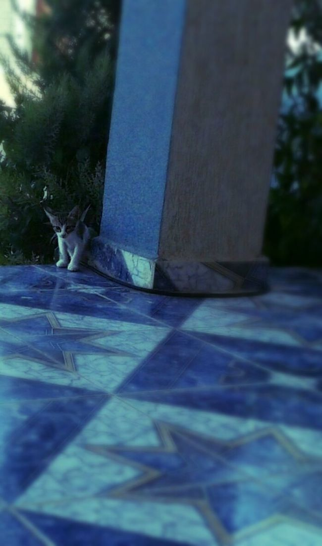 little kitty 2 ^^ in Azzawya Libya