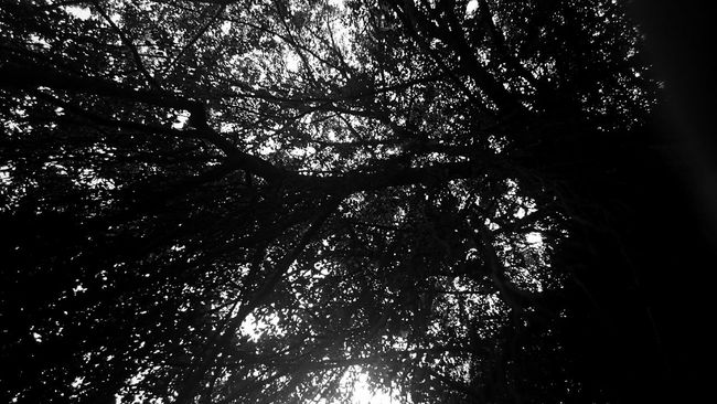 I feel like i am waiting for something that isn't going to happen. Light And Shadow Blackandwhite Black And White Silhouette Monochrome Hugging A Tree Trees EyeEm Best Shots