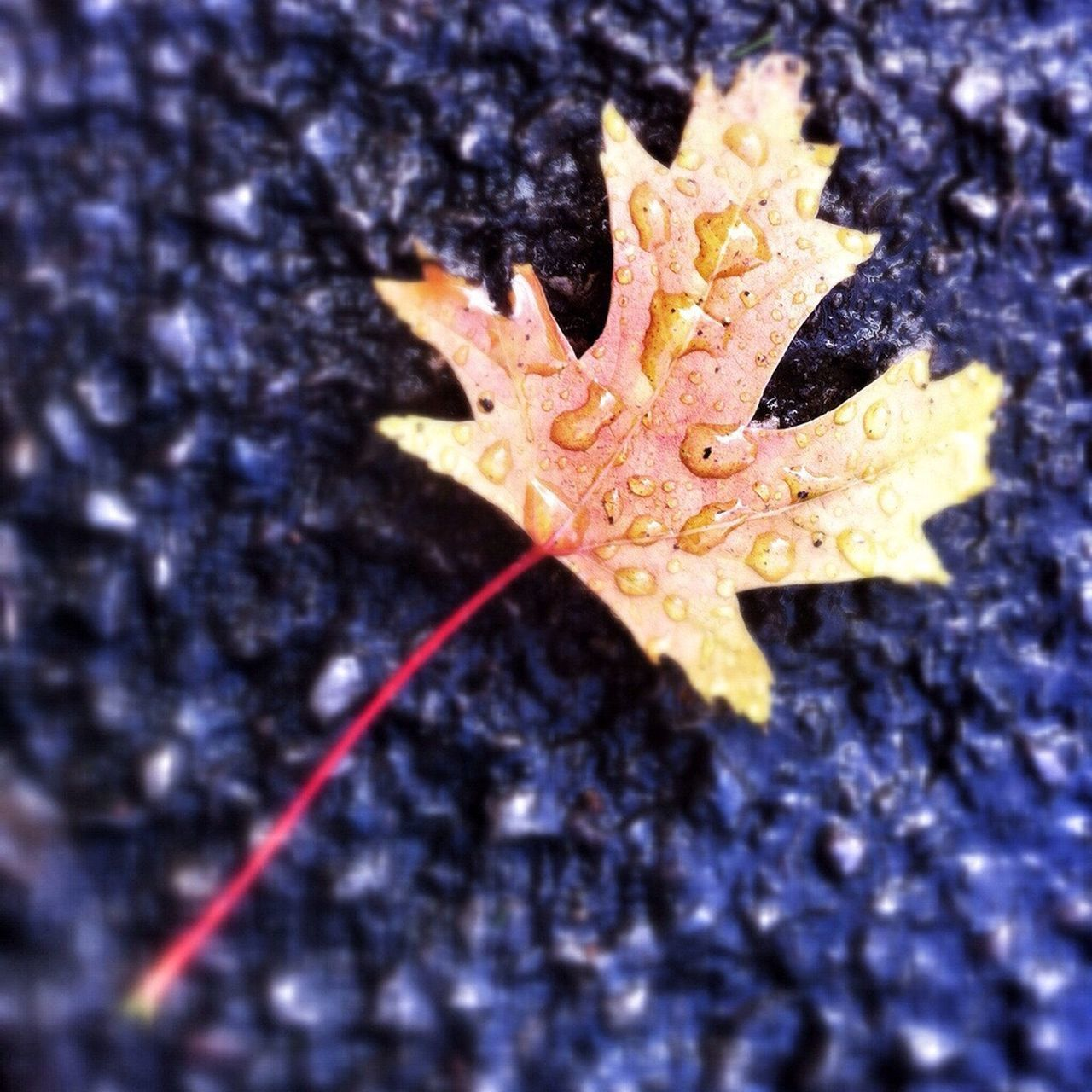 Maximum Closeness Leaves Autumn Autumn Colours Autumn Leaves Water A Macro Close Up RaindropsNature