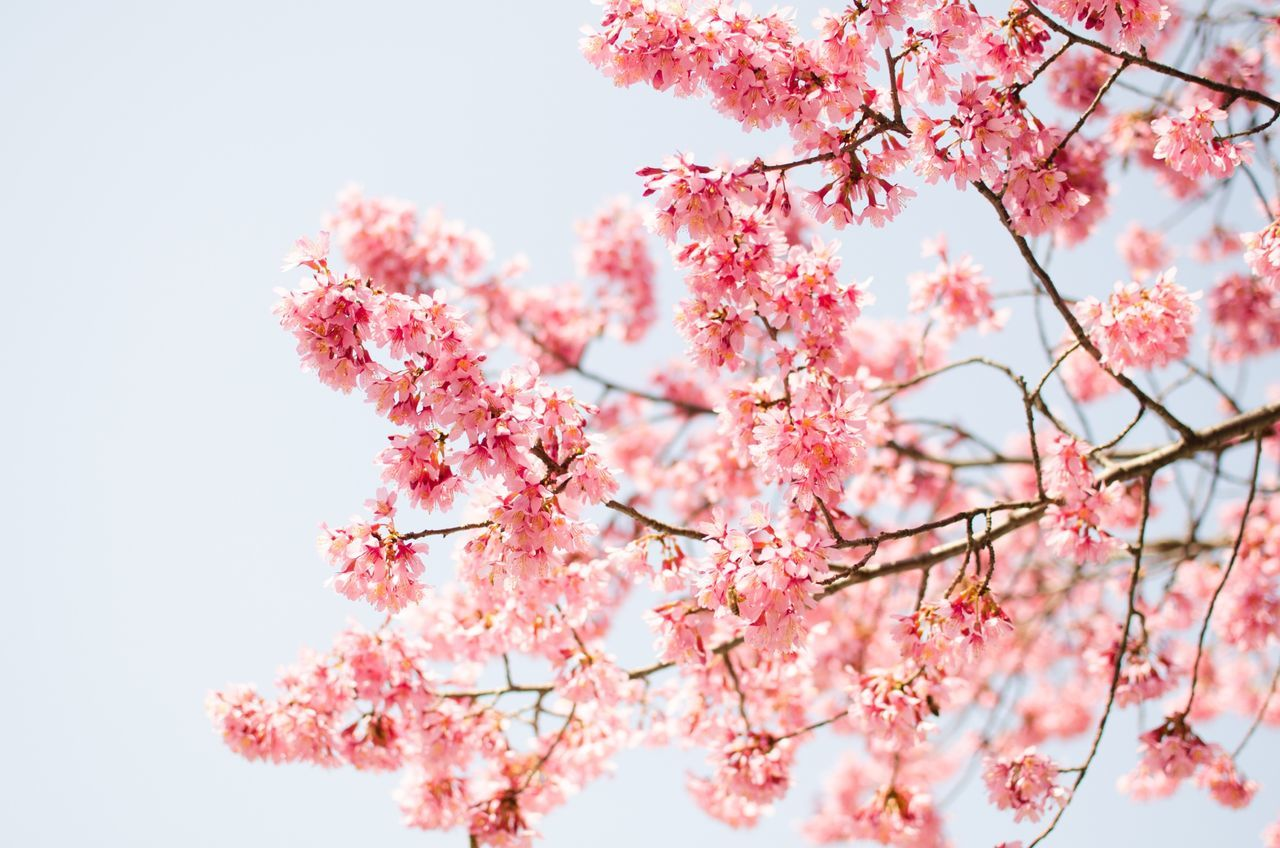 Beautiful stock photos of spring, Blossom, Branch, Day, Flower