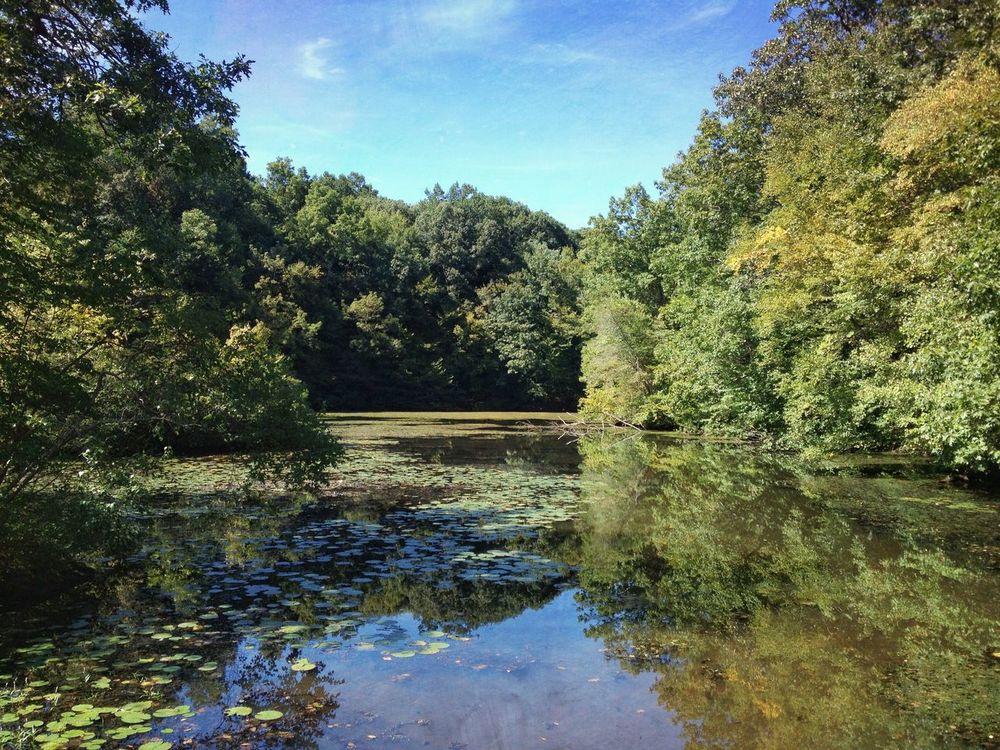 Nature Water Reflections Water Audubon