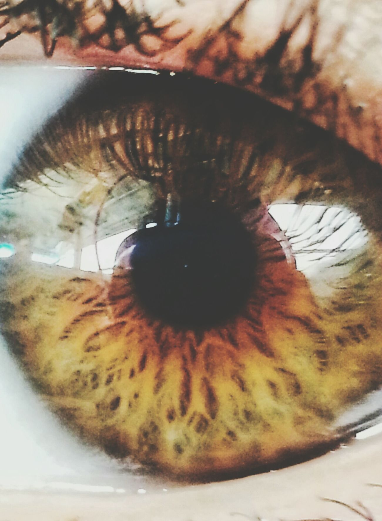 Photography Eyes Brown Eyes Hazel Eyes  Close Up Windows Of The Soul