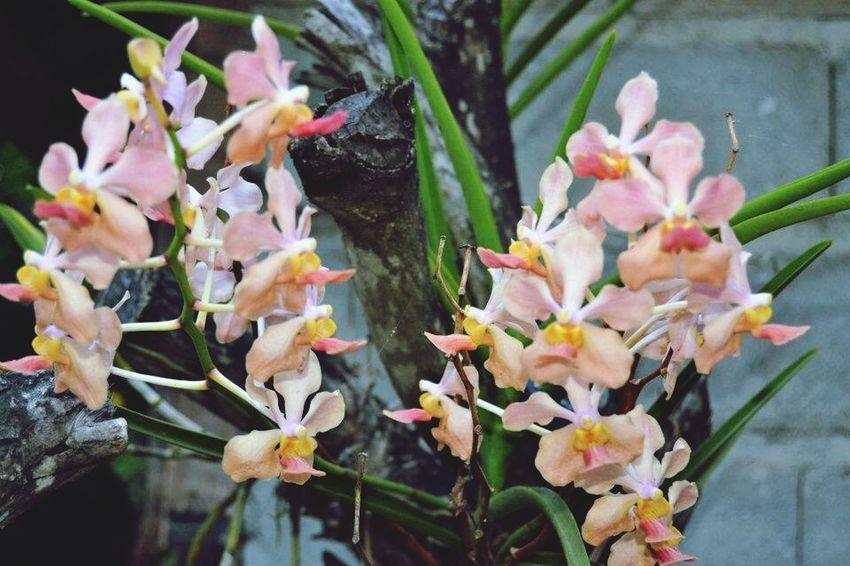 Orchids Tropics Flower