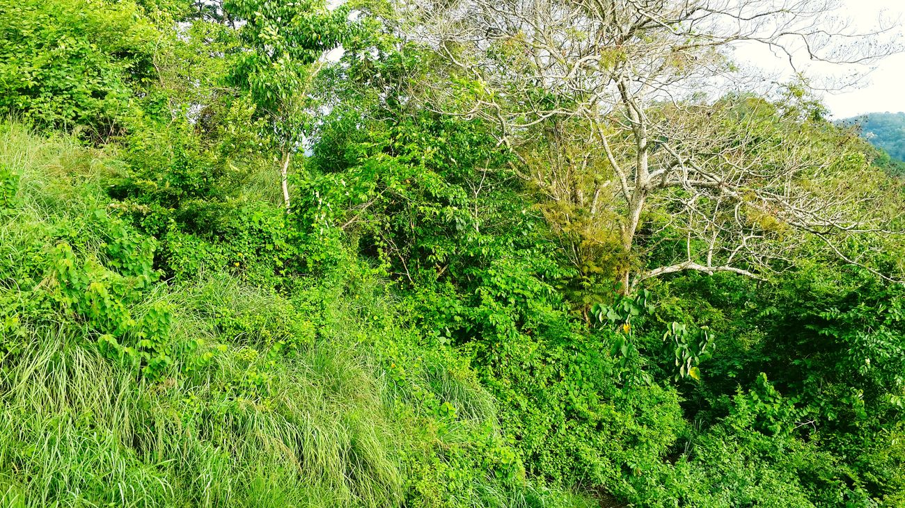 Neyyardam Kerala India Kerala Incredible India India God's Own Country Green Green Green!  Green Greenery Forest Forestwalk In The Forest