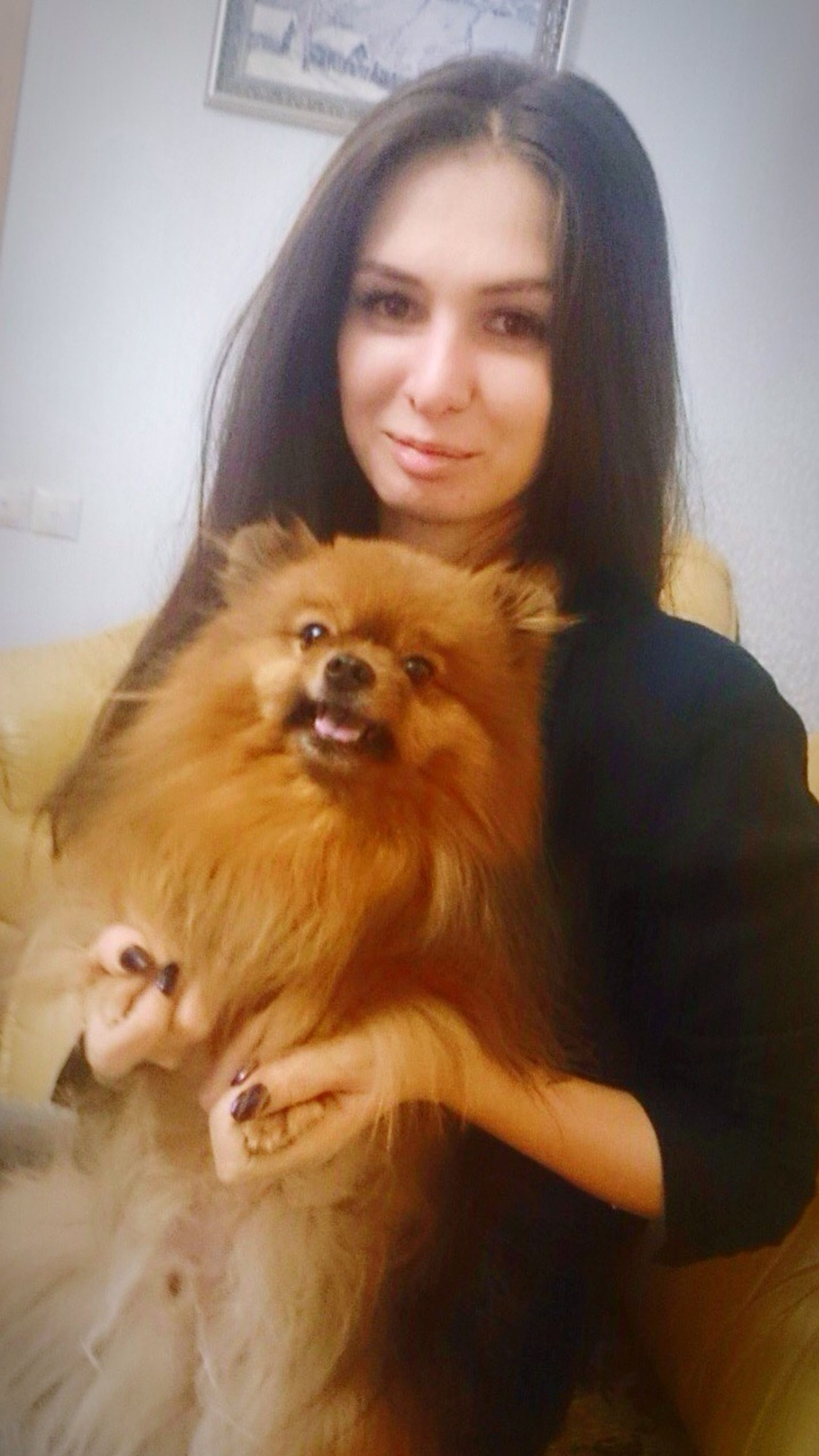 looking at camera, pets, one person, dog, indoors, domestic animals, portrait, long hair, lifestyles, young adult, young women, one animal, brown, real people, home interior, animal themes, mammal, one young woman only, pomeranian, cavalier king charles spaniel, day