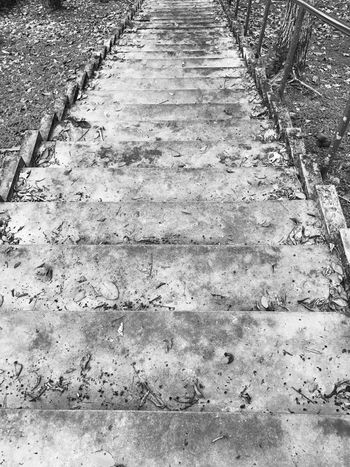 Stairway heading down... No People Day Outdoors Nature Close-up Blackandwhite