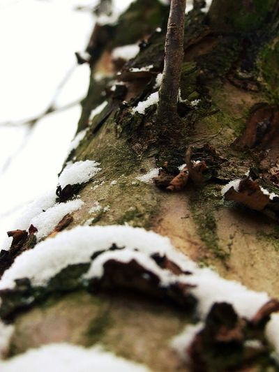 Tree Nature Winter Close-up Snow No People Cold Temperature