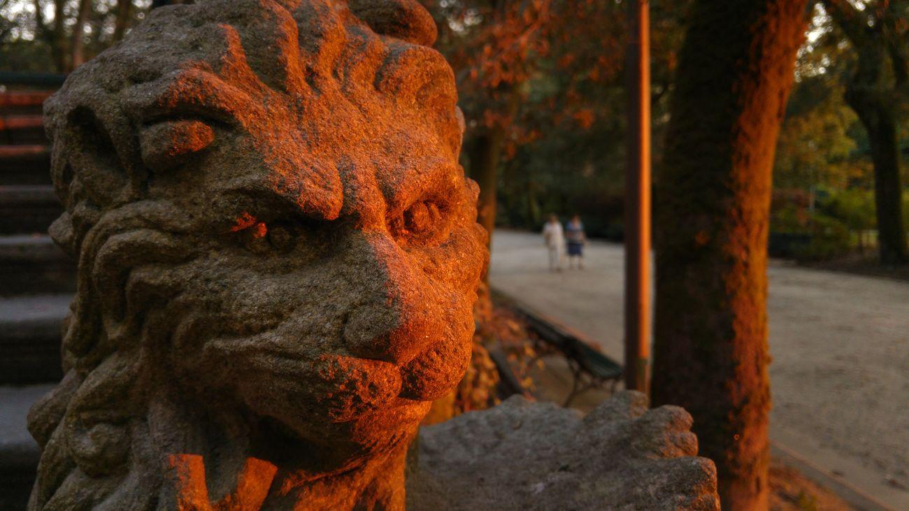 León de paseo - Lion of walk Leon Lion Paseo Walk Santiago De Compostela Galicia Galicia, Spain Fotografía Callejera Fotografia De Rua Streetphotography Street Photography LG G4 Lg G4 Photography Enjoying Life Mobile Photography