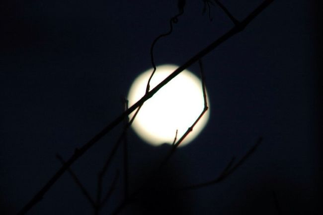Night Moon Branches