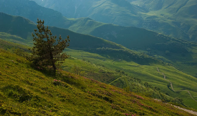 Col De Tende Green Hill Italy Landscape Majestic Nikon Non-urban Scene Scenics Tree Valley Showcase: February Peaceful