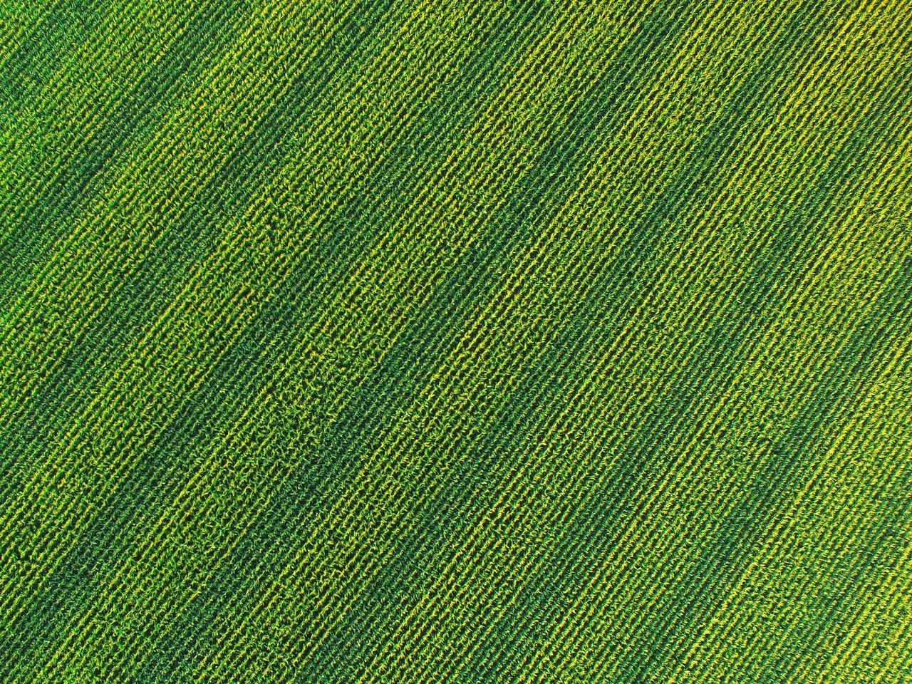 Farm Farmland Cornfield Agriculture Green Dronephotography Drone  Aerial View A Bird's Eye View Color Palette