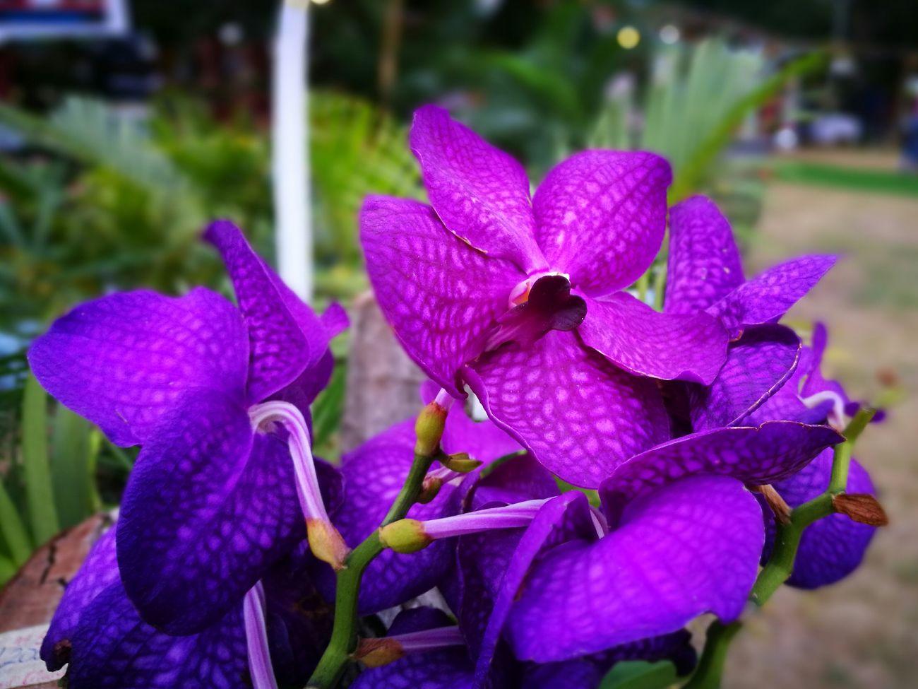 Pretty Purple Purple Flower Close Up
