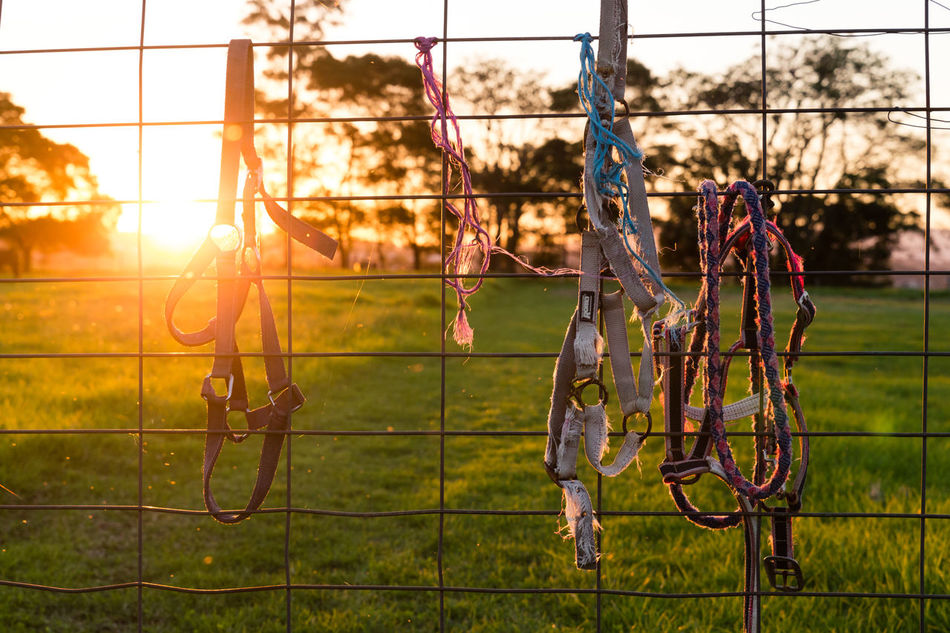 Day Farm Farm Life Field Grass Hanging Out Leisure Activity Lifestyles Nature Outdoors Ranch Sport Sunset
