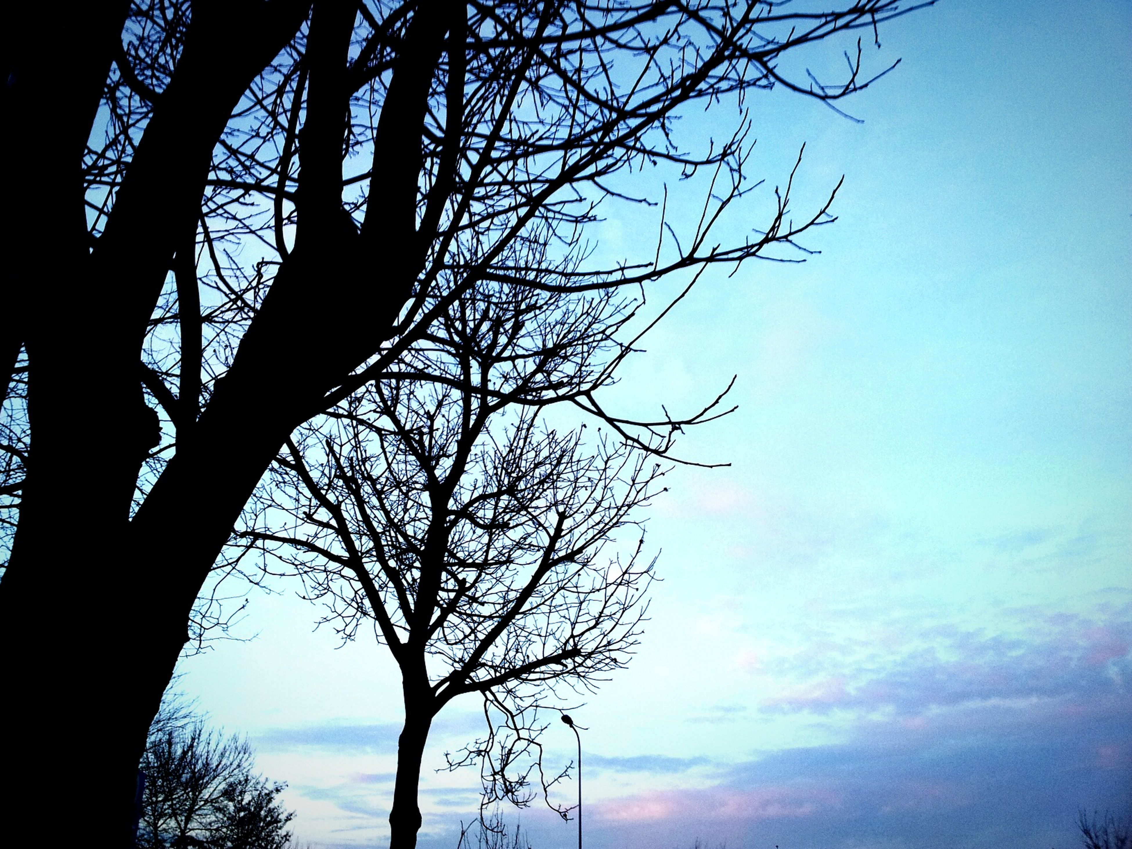 bare tree, tree, branch, low angle view, silhouette, sky, tranquility, tree trunk, beauty in nature, nature, scenics, tranquil scene, cloud - sky, single tree, sunset, cloud, outdoors, no people, growth, dusk