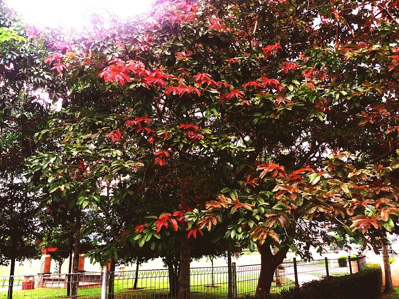 Colours leaves trees Tree Growth ParkNature Outdoors Beauty In Nature Sky Multicolor Leaves Red Maroon Green Shades