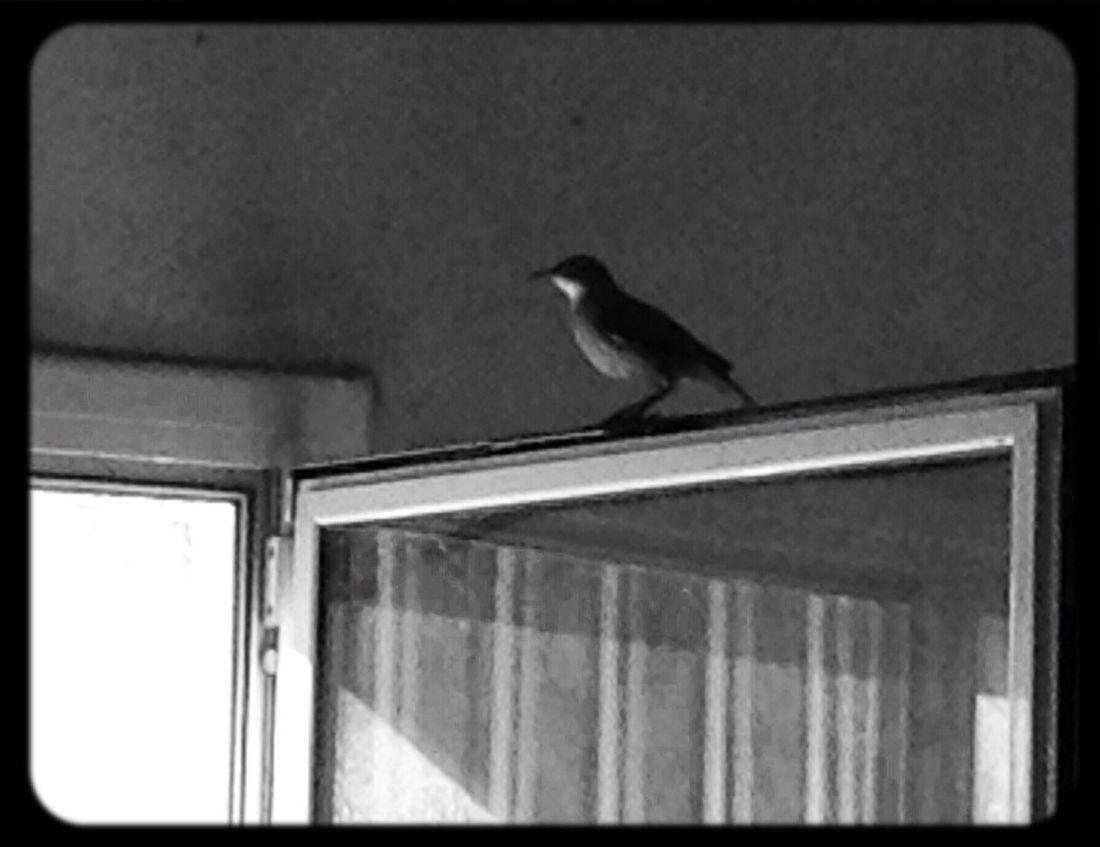 Free as a Birds Hornero Heart