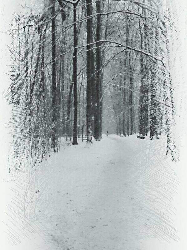 Follow to me... Gorzów Wielkopolski Poland Trees Black & White Blackandwhite Photography Blackwhite EyeEm Best Shots - Black + White EyeEm