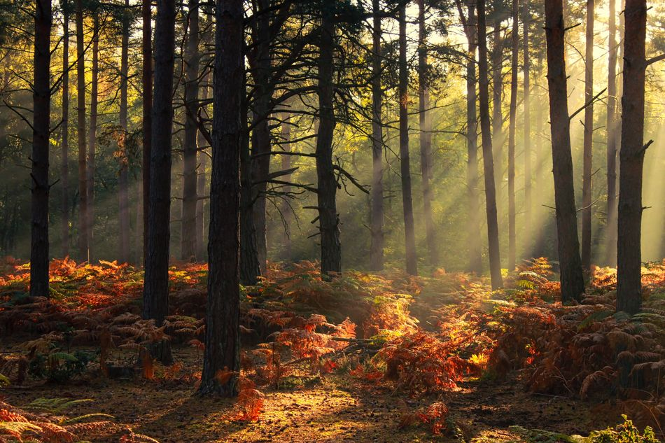 Beautiful stock photos of peaceful,  Autumn,  Awe,  Beauty In Nature,  Change