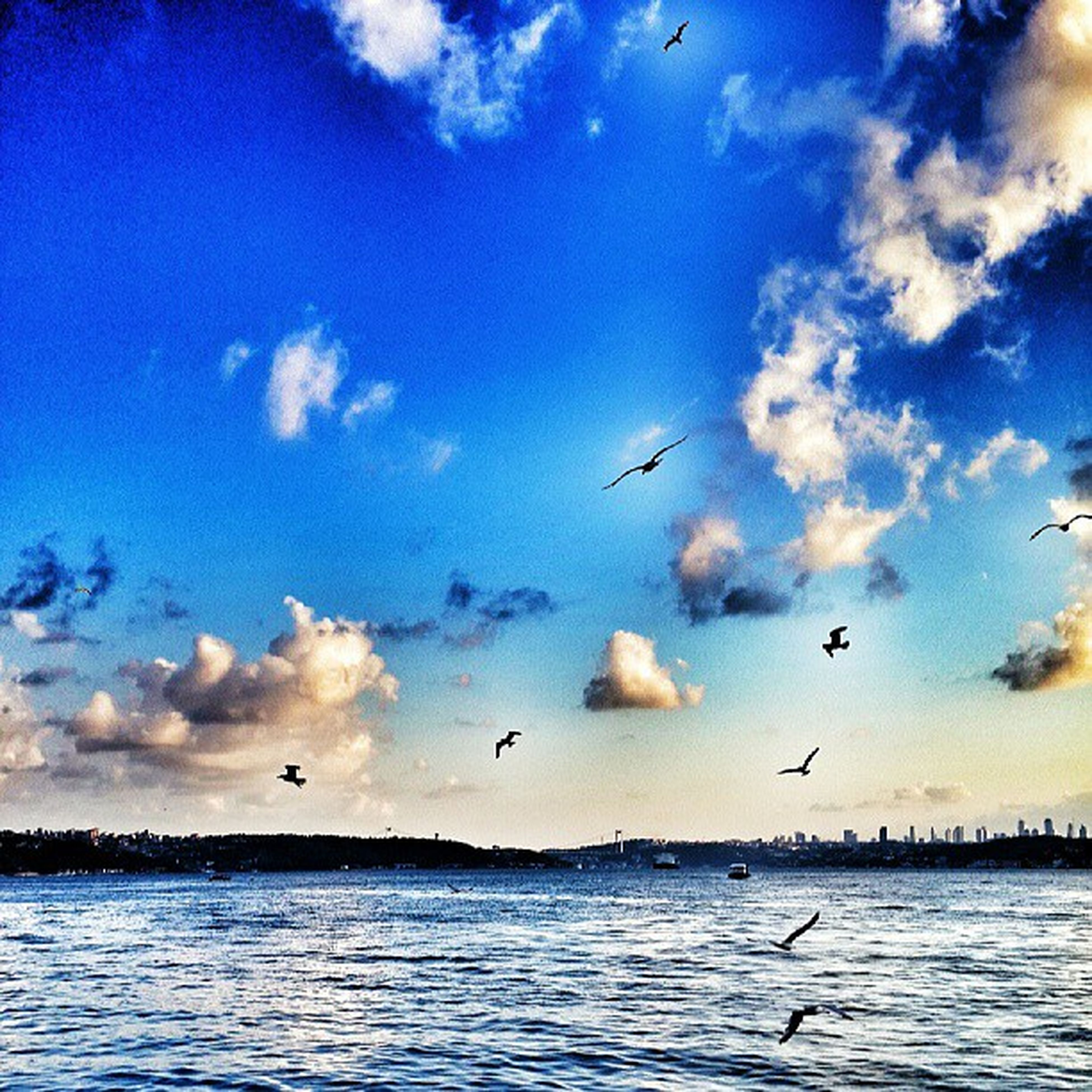 bird, flying, animal themes, animals in the wild, wildlife, water, sky, sea, flock of birds, waterfront, spread wings, blue, mid-air, nature, beauty in nature, seagull, cloud - sky, tranquil scene, scenics