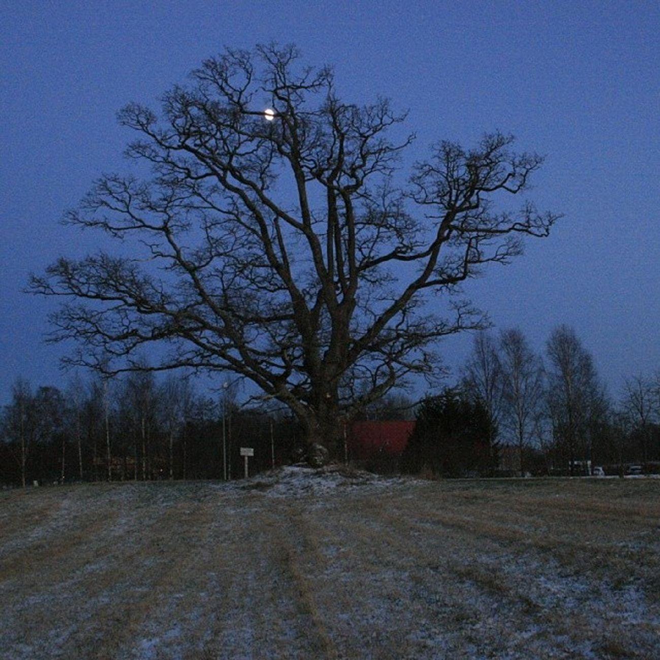 Ilovenorway Ilovenorway_akershus Follo   ås worldunion wu_norway winter frost evening moon ig_week_trees ig_week ig_week_winter ig_world ig_norway